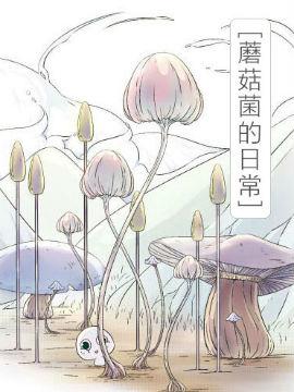 蘑菇菌的日常